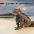 Neue Fotoreisen zu den Galapagosinseln und Ecuador