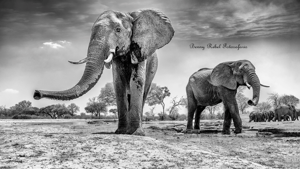 Elefanten Fotoreise Afrika