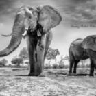 Bilder auf Fotoreisen professionell gestalten
