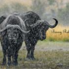 Fotografieren bei schlechtem Wetter auf Fotoreisen