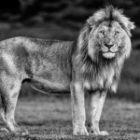 Der König auf Fotoreisen in Afrika