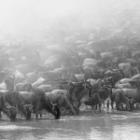 Das tierische Wunder – Die Migration der Huftiere