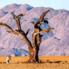 Namibia ersetzt unsere Indien-Tiger-Safari im kommenden Februar