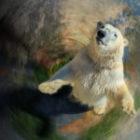 Der betende Eisbär – Wie entstehen Bilder mit einer Botschaft?