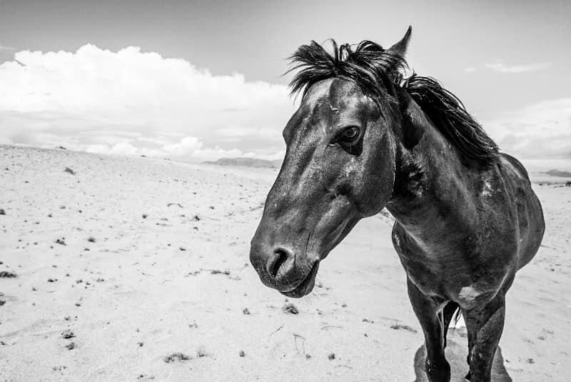 Benny Rebel Fotosafari Namibia 2021