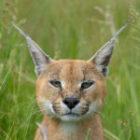 Auftakt der Fotosafari in Namibia mit tollen  Tierbildern