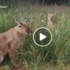Der erste Tag der nächsten Fotoreise durch Nambia- Video