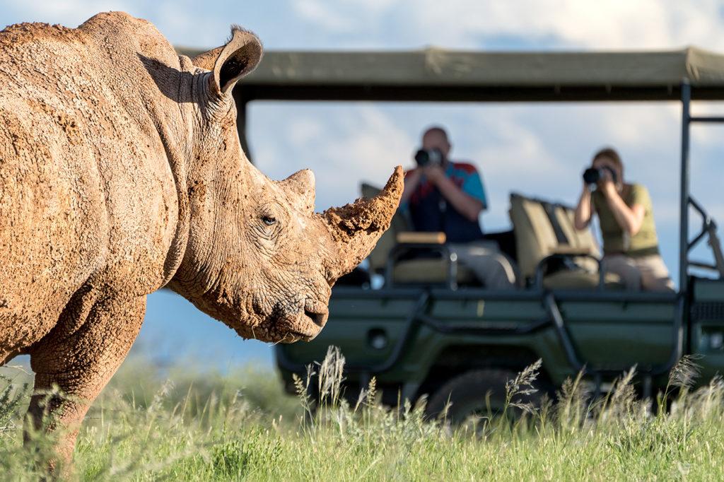 Nashorn fotografiert von Fotografen auf einer Fotoreise durch Namibia.