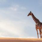 Ein neues Bild aus Namibia