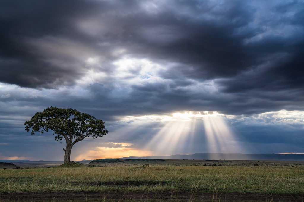Baum fotografiert auf einer Fotoreise durch die Massai Mara von Benny Rebel