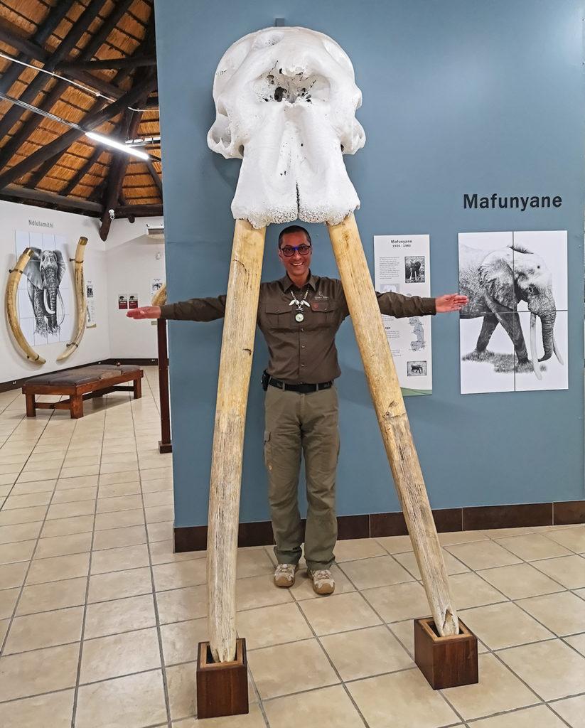 Benny Rebel im Elefantenmuseum in Letaba Südafrika