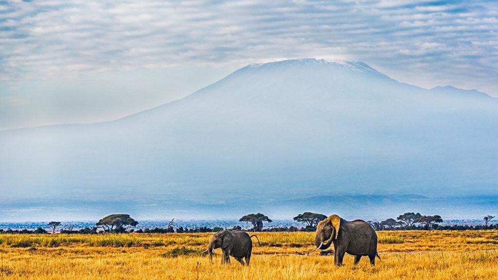 Elefanten vor dem Kilimanjaro fotografiert auf einer Fotoreise durch Kenia von Benny Rebel