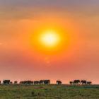 50 Elefanten auf einem Bild in Botswana