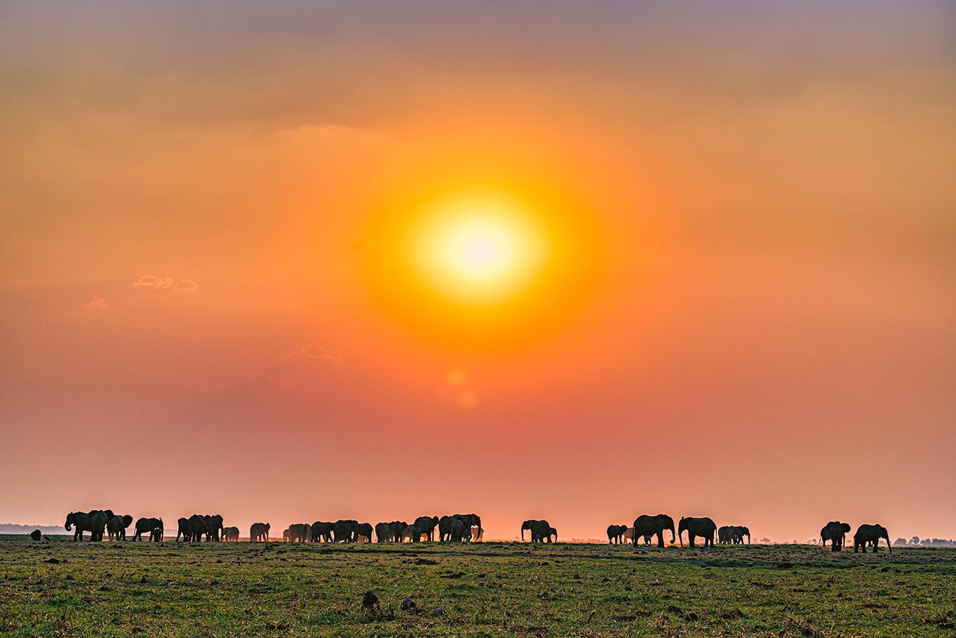 50 Elefanten beim Sonnenuntergang im Chobe Nationalpark in Botswana. Fotografiert von Benny Rebel auf einer Fotoreise durch Botswana.