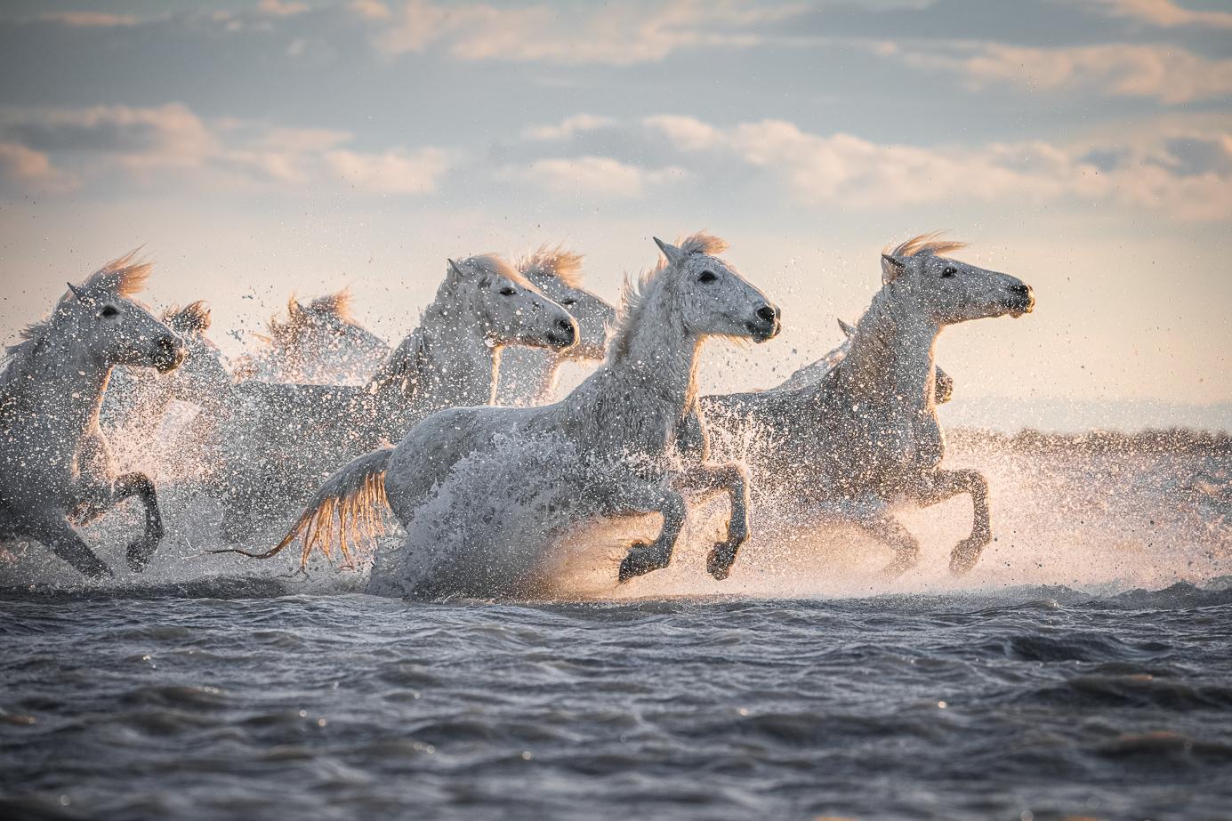 Camargue-Pferde fotografiert auf einer Fotoreise durch Frankreich