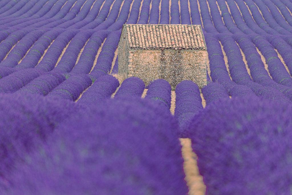 Lavendelfeld Südfrankreich Fotoreise