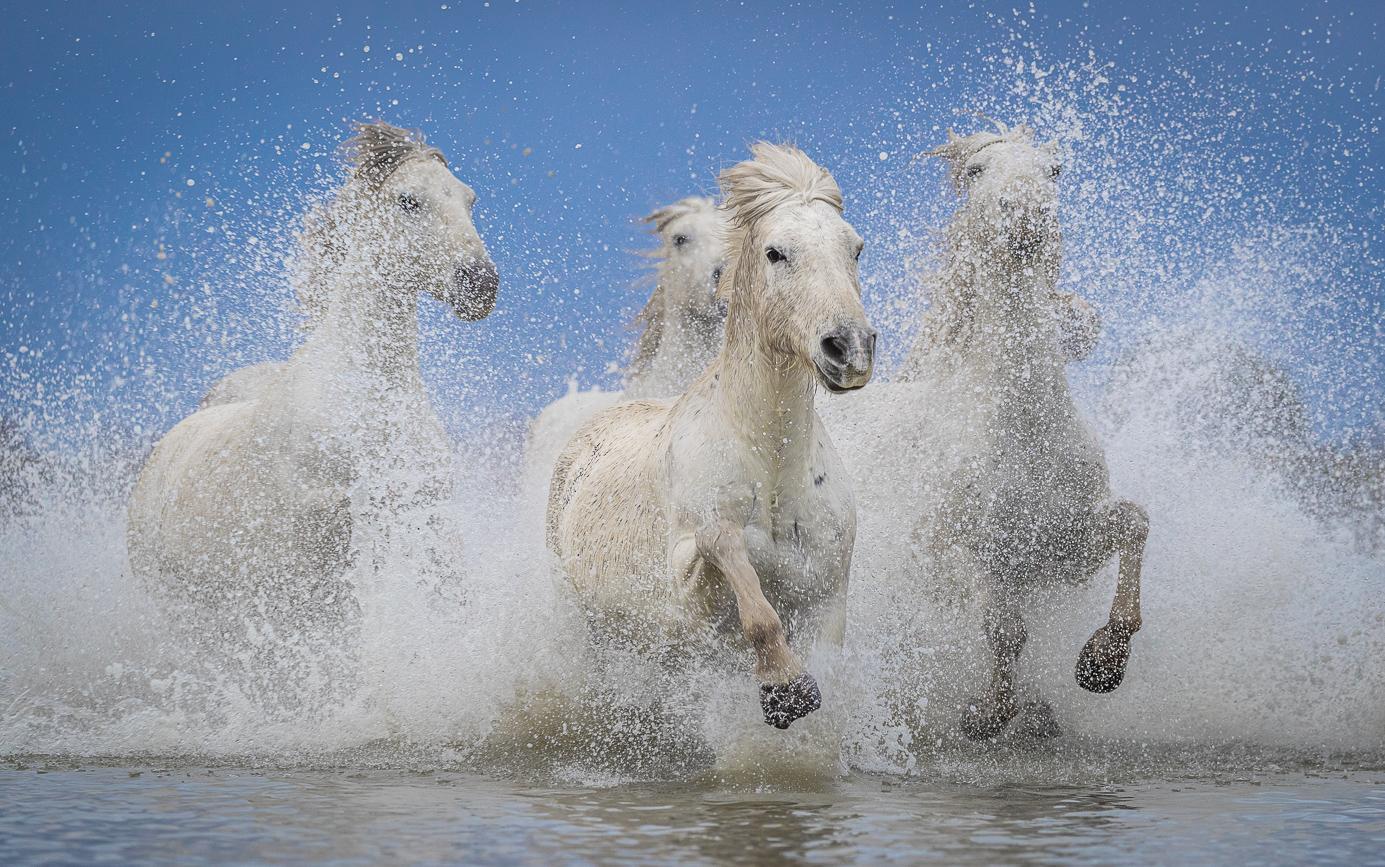 Pferde auf einer Fotoreise in Frankreich fotografieren
