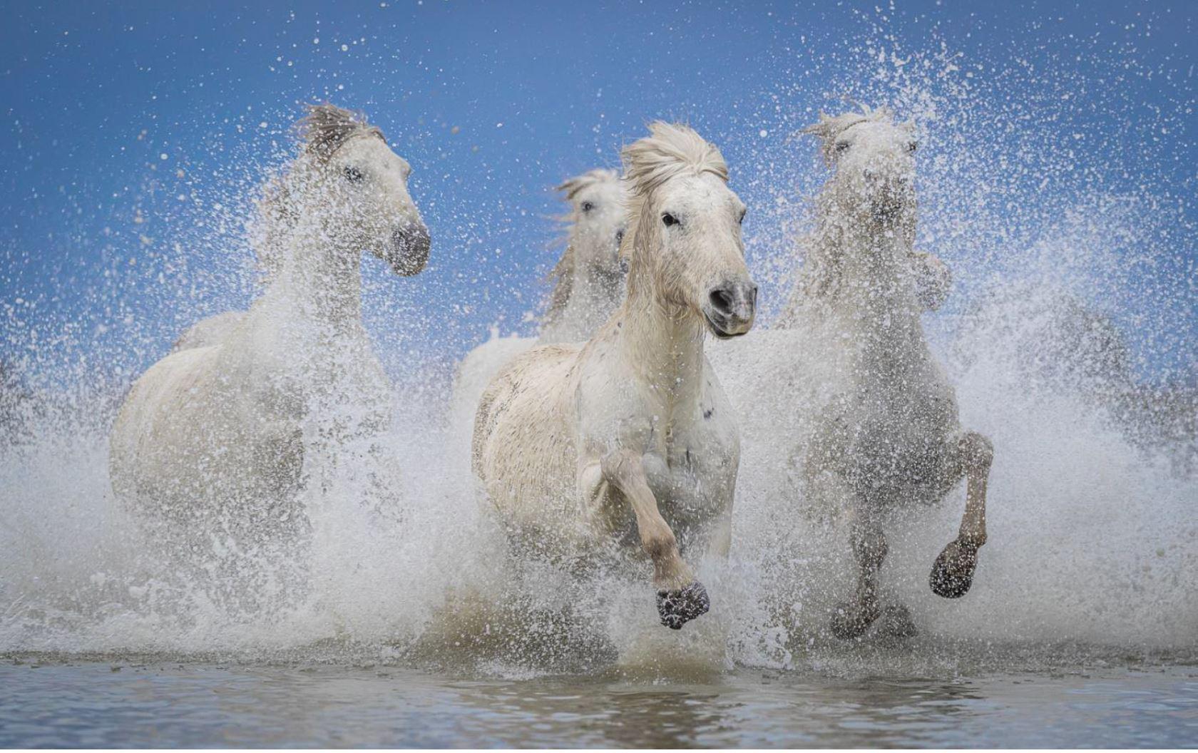 Fotoreise Frankreich Pferde Camargue