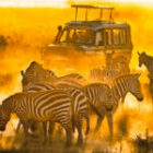 Nur noch ein freier Platz auf jeder Fotoreise nach Kenia