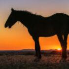 Das Pferd ist elegant, anmutig, schön und beliebt