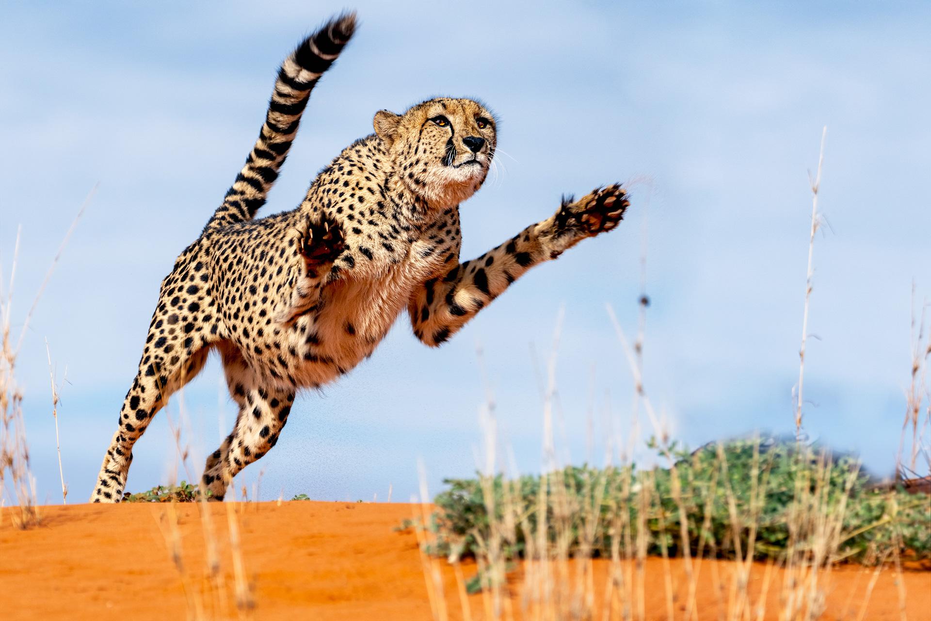 Fotoreise-Fotosafari-hd-2021-001-Namibia