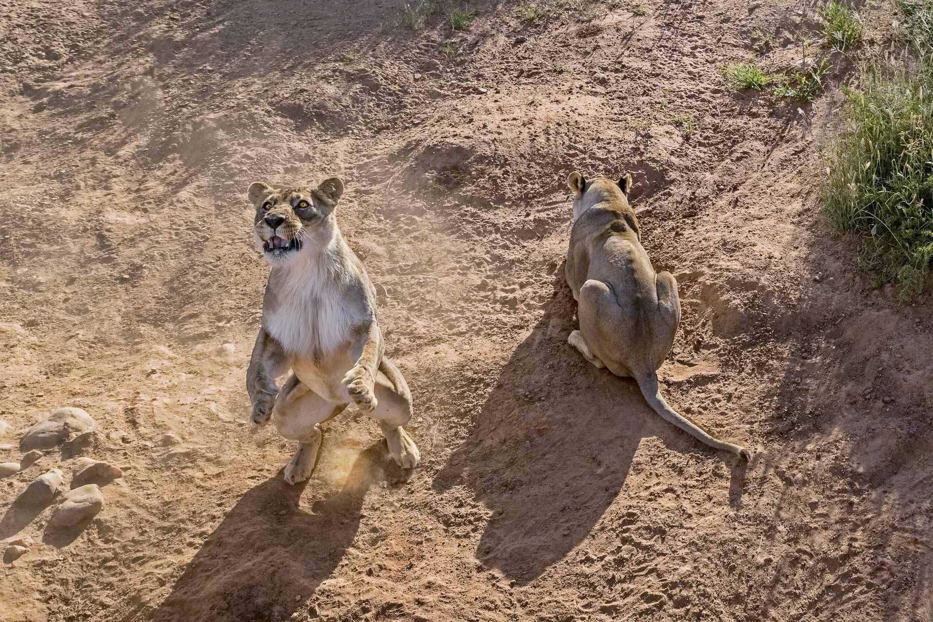 Fotoreise-Fotosafari-hd-2021-087-Namibia