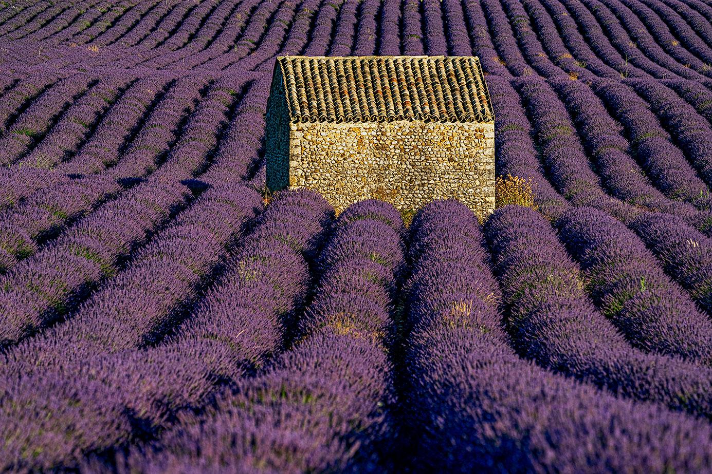 Lavendelfelder fotografiert auf einer Fotoreise mit Benny Rebel Fotosafaris GmbH