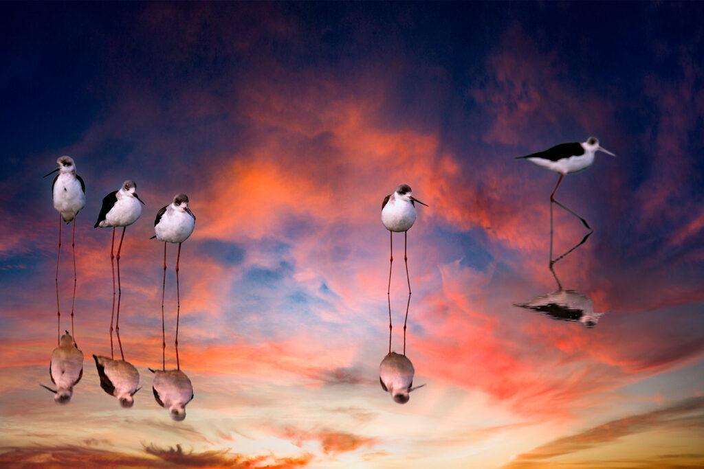 Tansania Fotosafari - Vögel Wasser Spiegelung