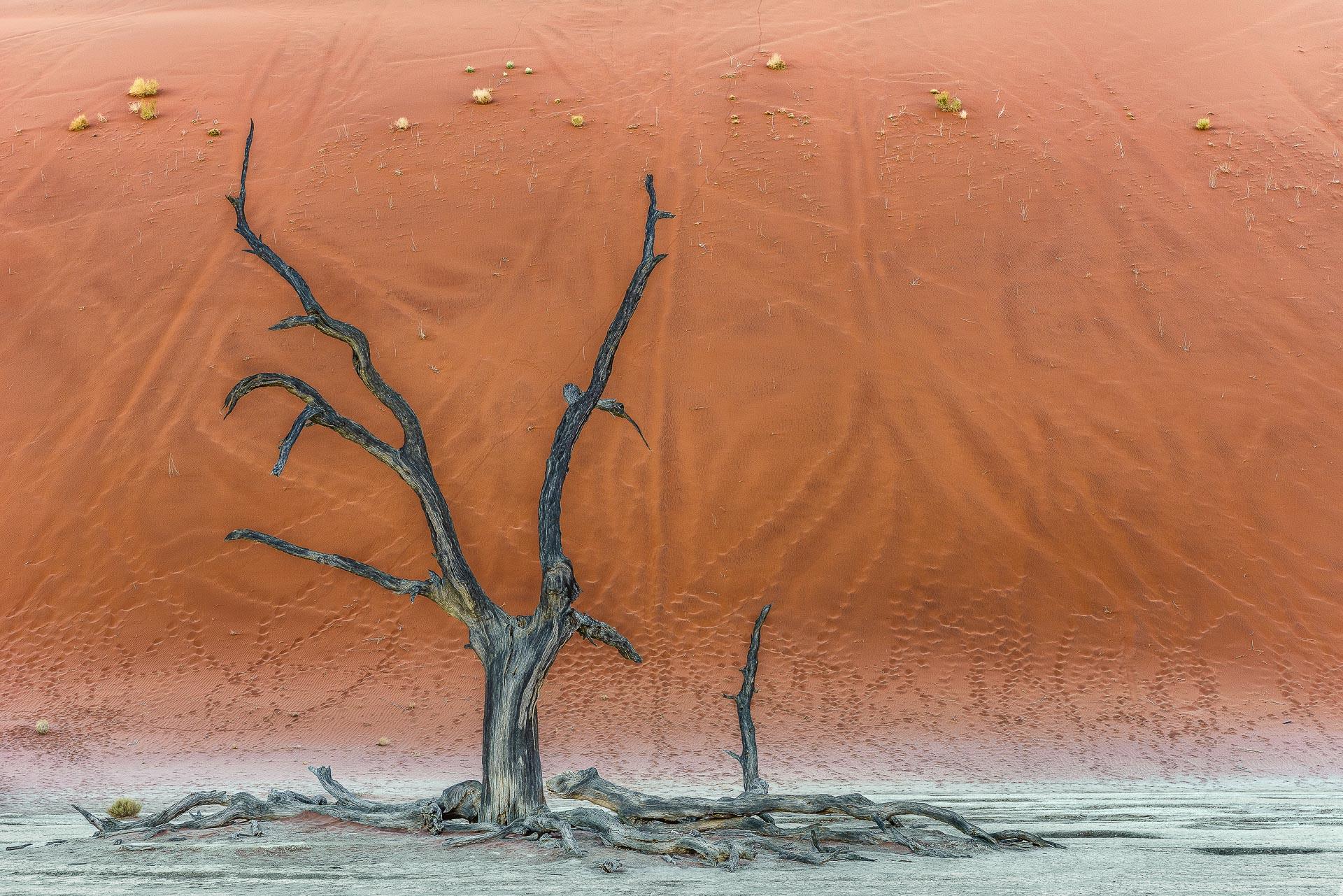 fotoreise-fotosafari-hd-2021-037-Namibia