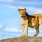 14 Tage Fotosafari  durch Tansania mit Benny Rebel