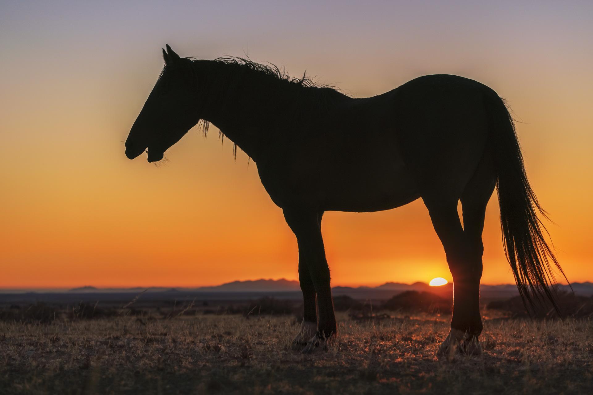 fotoreise-fotosafari-hd-2021-407-Namibia
