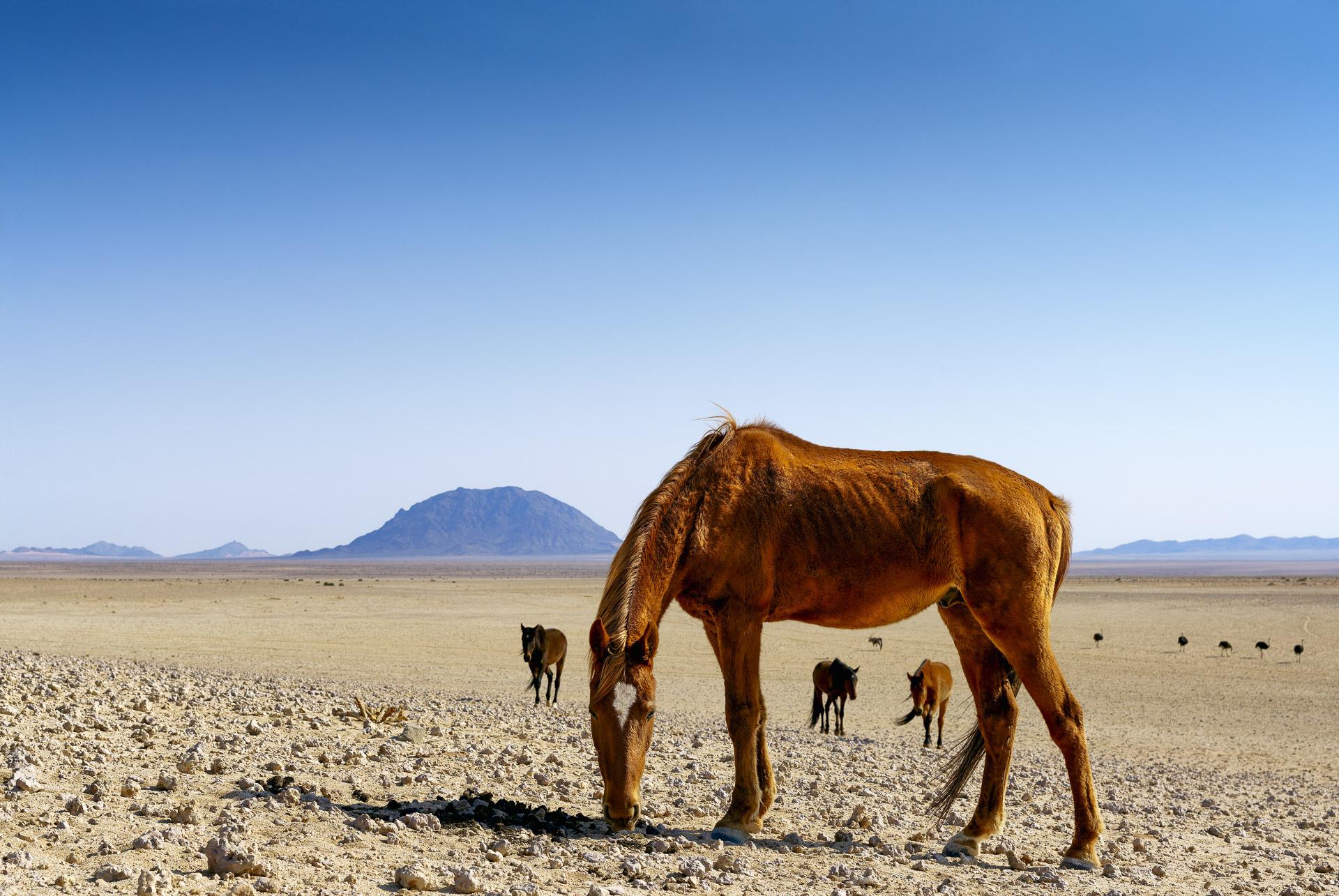 fotoreise-fotosafari-hd-2021-524-Namibia
