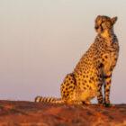 Fantastische Fotoausbeute in Namibia